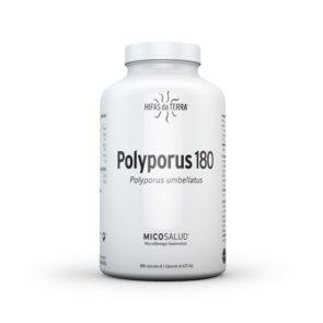 Polyporus 180 Extracto y polvo de Polyporus