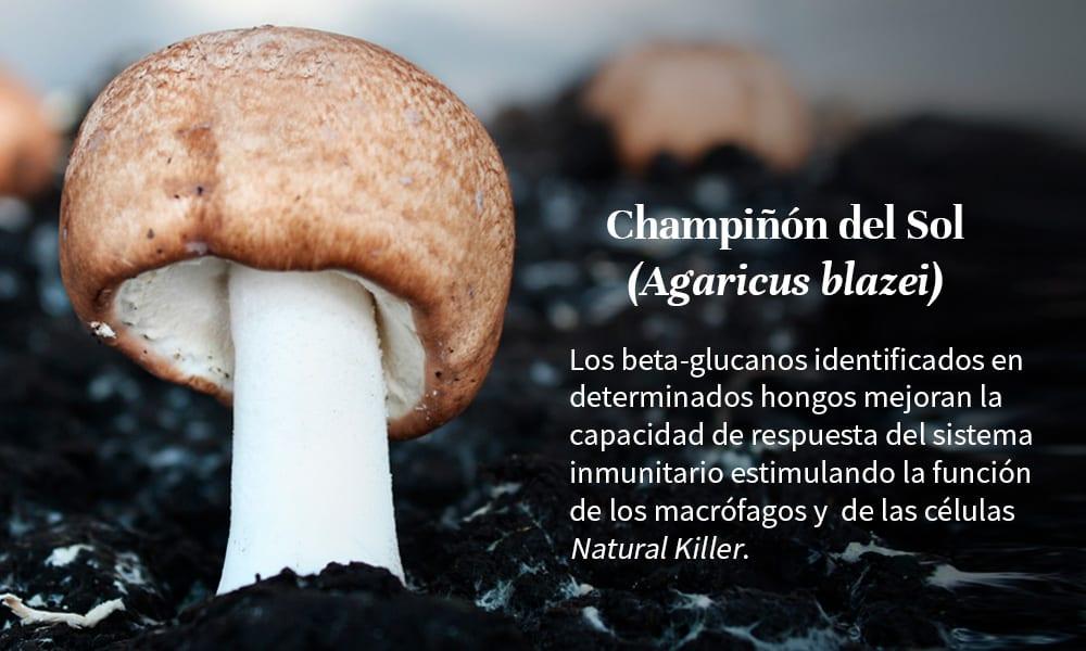 beta-glucanos-agaricus-blazei