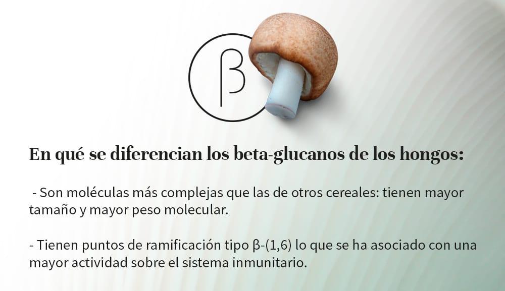 beta-glucanos-hongos-hifas-da-terra