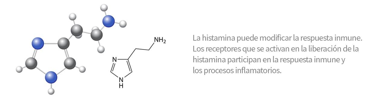 histamina: modifica respuesta inmune